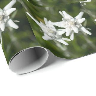 Flor alpina de Edelweiss Papel De Presente