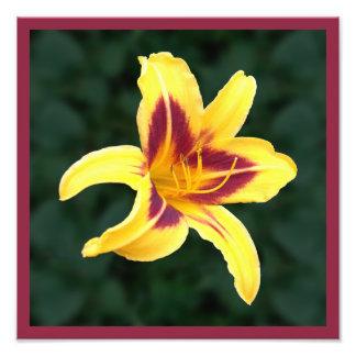 Flor amarela com vermelho, Hemerocallis do Impressão De Foto