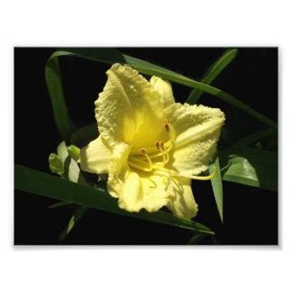 Flor amarela do hemerocallis impressão de foto