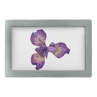 Flor azul de Siberica da íris