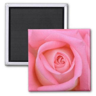 Flor bonita do rosa do rosa ímã quadrado
