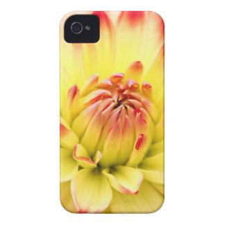 flor bonita mf capinhas iPhone 4