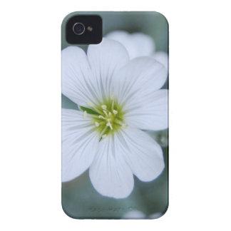 flor branca 5 mf capinhas iPhone 4