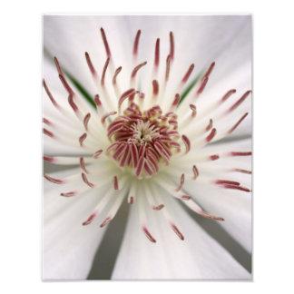 Flor branca impressão fotográficas