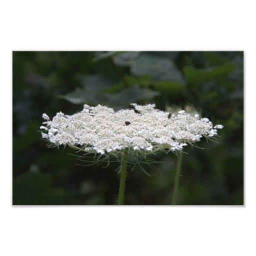 Flor branca impressão de fotos