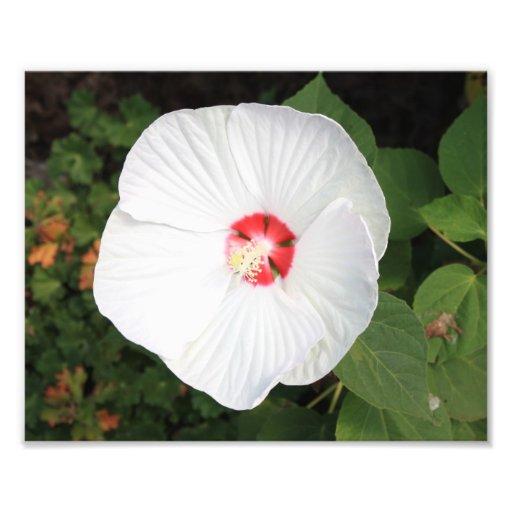 Flor branca artes de fotos