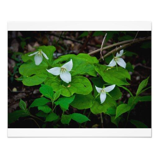 Flor branca foto artes