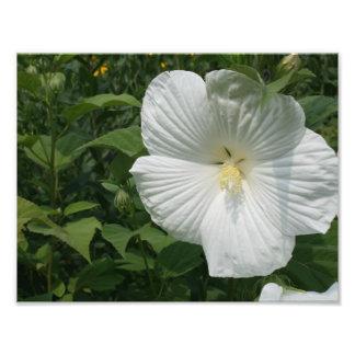 flor branca fotografias
