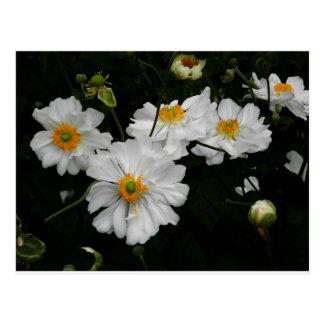 Flor branca cartão postal