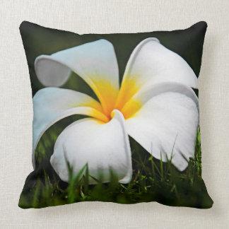 Flor branca de Havaí do Frangipani do Plumeria Almofada