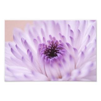 Flor branca e roxa impressão de foto