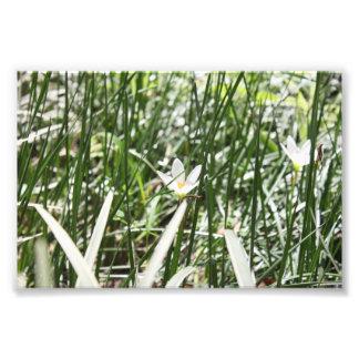 Flor branca impressão de foto