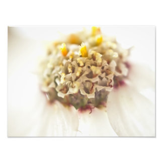 Flor branca, macro arte de fotos