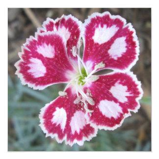 Flor branca vermelha do cravo-da-índia convite quadrado 13.35 x 13.35cm
