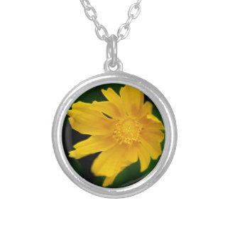 Flor brilhante e significado do Coreopsis Colares