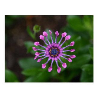 flor cartão postal