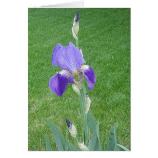Flor com cartão da abundância