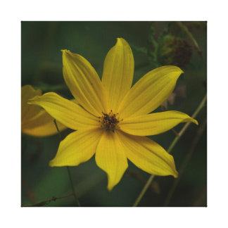 Flor, cópia das canvas