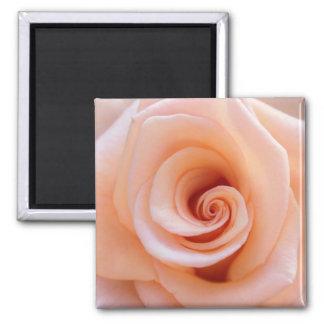 Flor cor-de-rosa da laranja bonita ímã quadrado