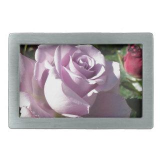 Flor cor-de-rosa da única violeta com rosas