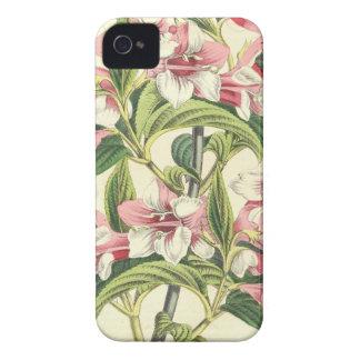 Flor cor-de-rosa do crisântemo do vintage capinhas iPhone 4