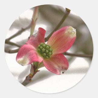 Flor cor-de-rosa do Dogwood Adesivo