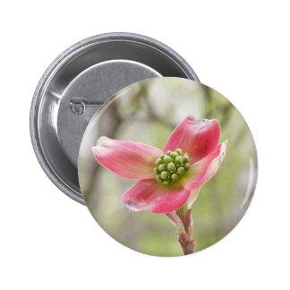 Flor cor-de-rosa do Dogwood Boton