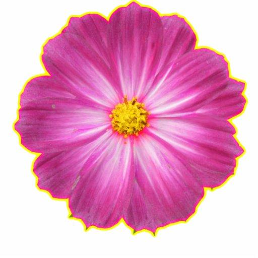 flor cor-de-rosa e amarela escultura de foto