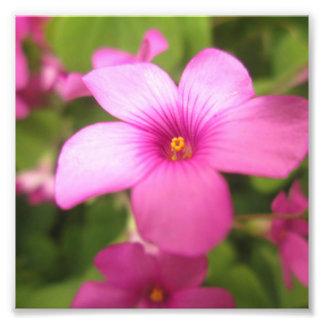 Flor cor-de-rosa impressão de foto