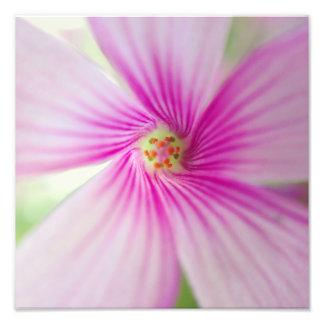 Flor cor-de-rosa minúscula fotografias