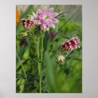 Flor cor-de-rosa pôster