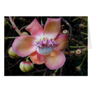 Flor da árvore da bala de canhão cartão comemorativo