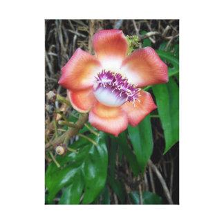 Flor da árvore da bala de canhão impressão em tela