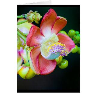 Flor da bala de canhão cartão comemorativo