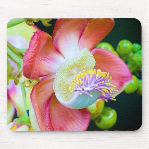 Flor da bala de canhão mouse pad