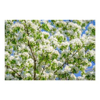Flor da maçã de caranguejo impressão de foto