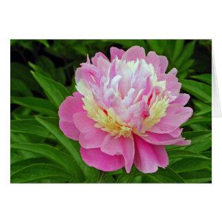 Flor da peônia cartão comemorativo