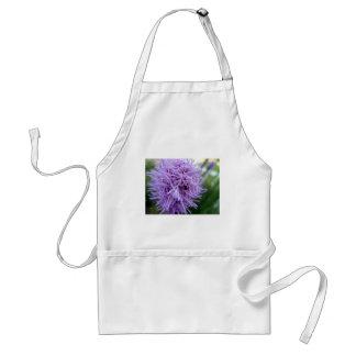 Flor da violeta da aranha do tentáculo avental