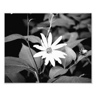 Flor de B&W Impressão De Foto