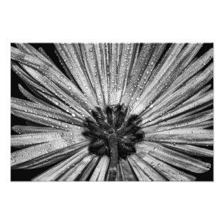 Flor de cabeça para baixo em preto & no branco foto artes