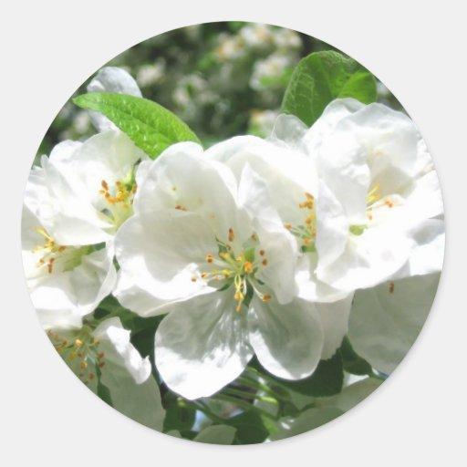 Armario Metal Com Chave ~ Flor de cerejeira branca etiqueta adesivo Zazzle