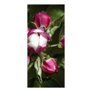 Flor de cerejeira cor-de-rosa - rackcard 10.16 x 22.86cm panfleto