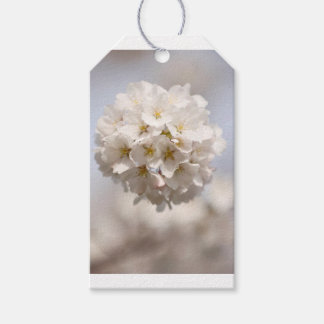 Flor de cerejeira etiqueta para presente