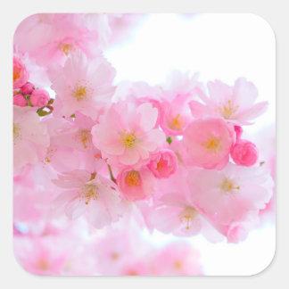 Flor de cerejeira japonesa cor-de-rosa maravilhosa adesivo quadrado