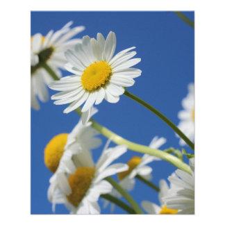 Flor de Dasy Panfleto Coloridos