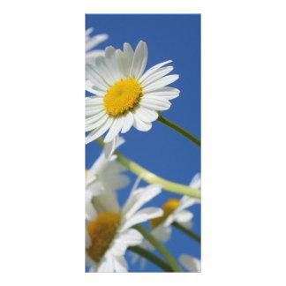 Flor de Dasy Panfleto Personalizado
