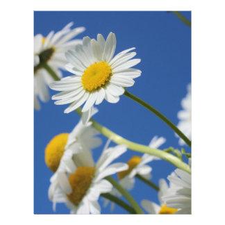 Flor de Dasy Panfletos Personalizados