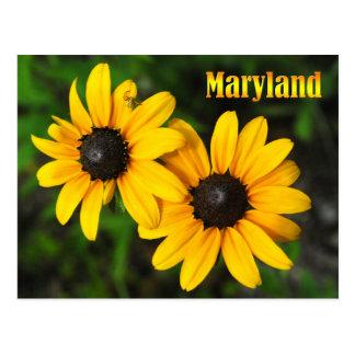 Flor de estado de Maryland: Susan de olhos pretos Cartão Postal