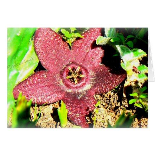 Flor de estrela do mar - flor roxa do cacto/Succul Cartões