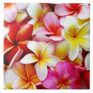 Flor de Havaí do Frangipani do Plumeria Azulejo Quadrado Grande